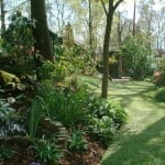 garden with artificial turf